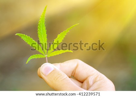 Green cannabis leaf in hand, sunny - stock photo