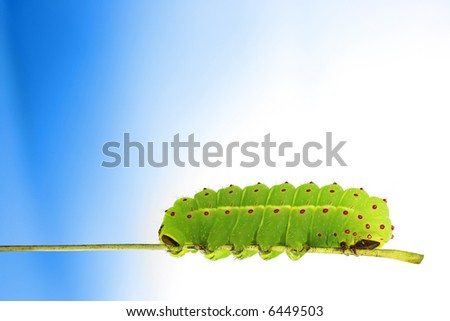 Green caterpillar on blue background