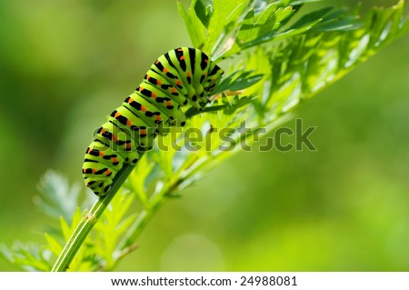 Green caterpillar on natural background - stock photo