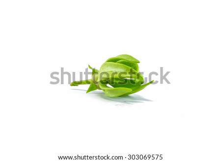 Green Champak bud flower isolated on white background