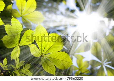 Green chestnut leaves with sun ray - stock photo