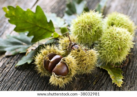Green chestnuts on wood close up shoot
