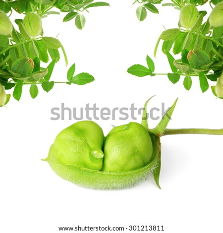 green chickpeas  in pod with plant on pure white background - stock photo