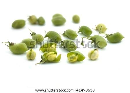 Green Chickpeas in pods - High resolution image of fresh chickpeas straight from the farm. Hairy texture of the pod skin is visible in large image. Some pods opened to reveal the chickpeas. - stock photo