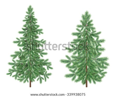 Green Christmas holiday spruce fir trees isolated on white background. Vector - stock photo