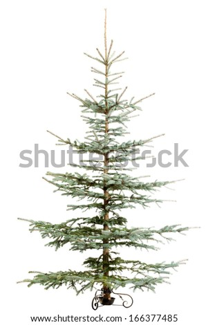 Green christmas tree standing. Isolated on white.  - stock photo