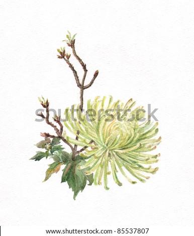 Green chrysanthemum watercolor painting - stock photo