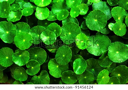 Green circle leaves background - stock photo