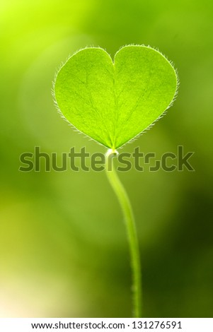 Green clover - stock photo