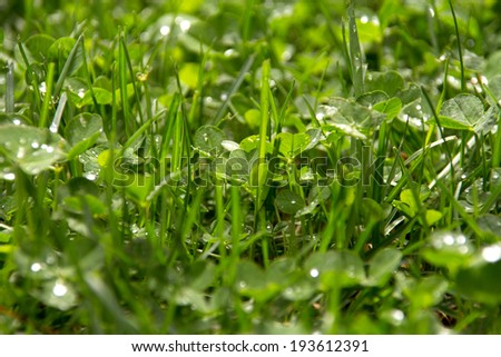 green clover and grass field selective focus - stock photo