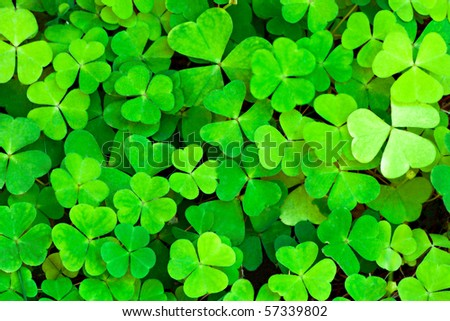 green clover background - stock photo