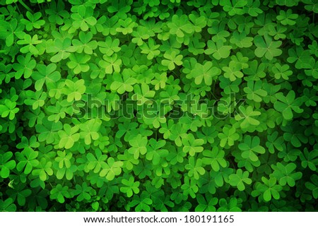 green clover background in vintage style - stock photo