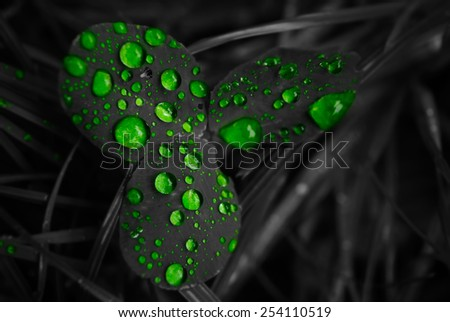 Green clover drops isolated on black background, shallow depth of field - stock photo