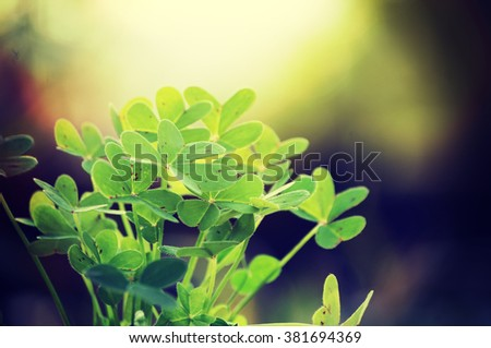 Green clover field, Spring concept, st.Patrick's day background - stock photo