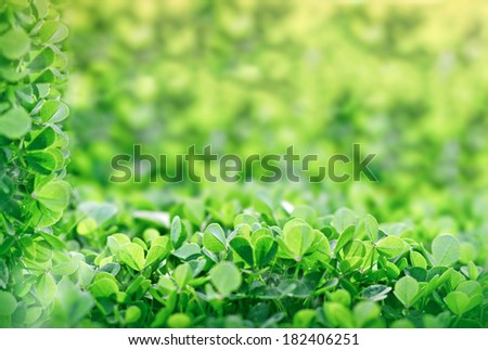 Green Clover in early spring - stock photo