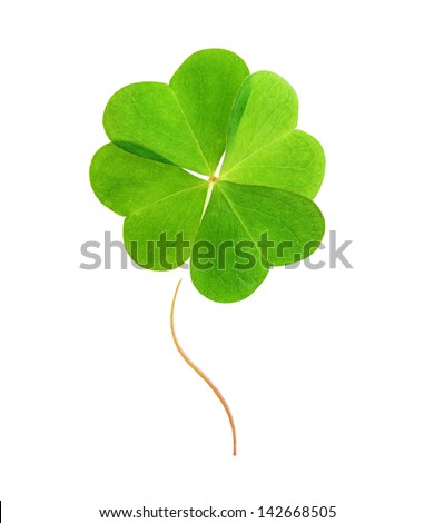 Green clover leaf isolated on white background. - stock photo