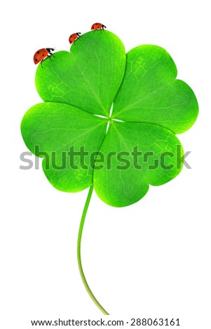 Green clover leaf with ladybugs isolated on white background - stock photo