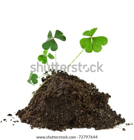 green clover plant growing on soil heap pile isolated on white background - stock photo