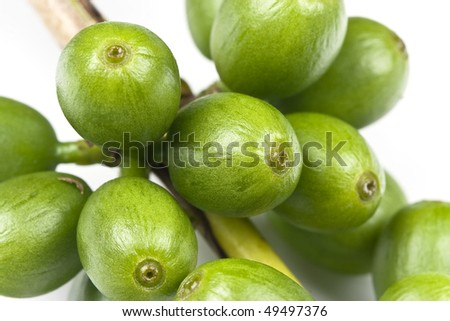 Green coffee before it is ripe, isolated on white, macro lens used. - stock photo