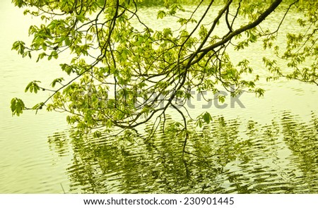 Green colors of spring in the mountain in Spain. A forest reflecting its trees in the water - stock photo