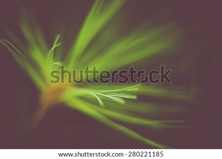 green conifer needle glow - dark and soft abstract background