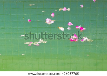 Green contaminated water have the petals flower. - stock photo