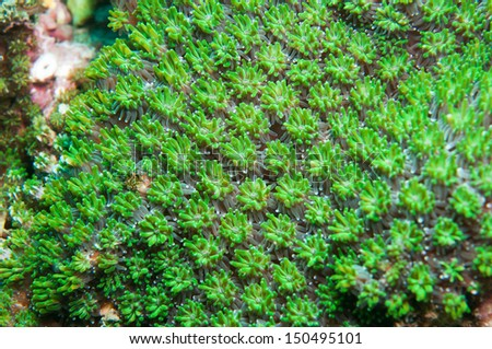 Green coral texture