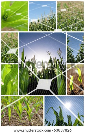 Green corn field collage with photovoltaic panel - stock photo