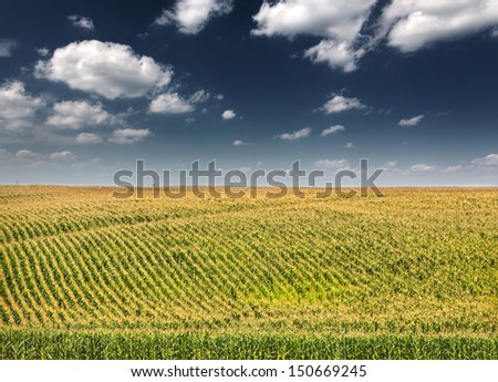 green corn field under blue sky with clouds - stock photo