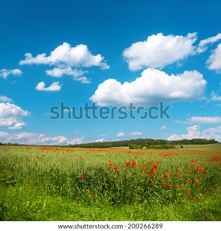 green corn field with poppy flowers and beautiful blue sky - stock photo