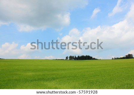 green cornfield trees and cloudy blue sky