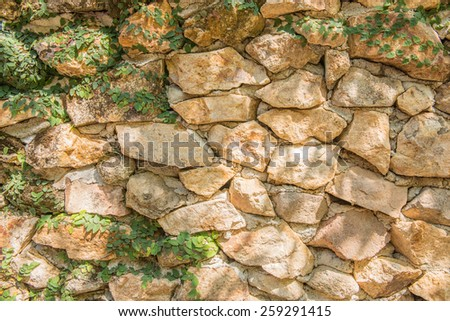 Green Creeper Plant growing on a rock wall - stock photo