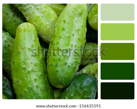 Green cucumbers color palette with complimentary swatches. - stock photo