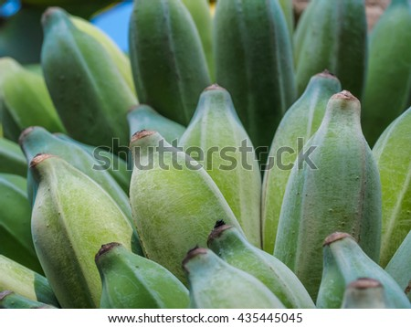 Green cultivated banana. - stock photo