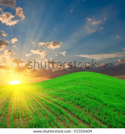 green culture on a hill by a sunset - stock photo