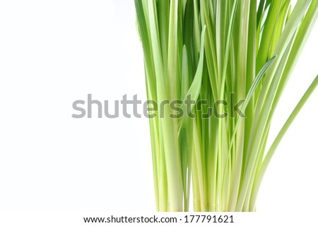 green daffodil flowers leaves isolated on white background  - stock photo
