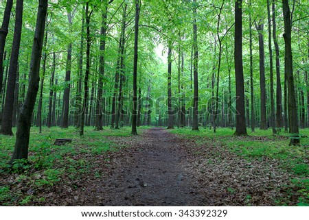 Green deciduous forest after the rain. - stock photo