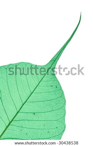 Green decorative leaf isolated on white.