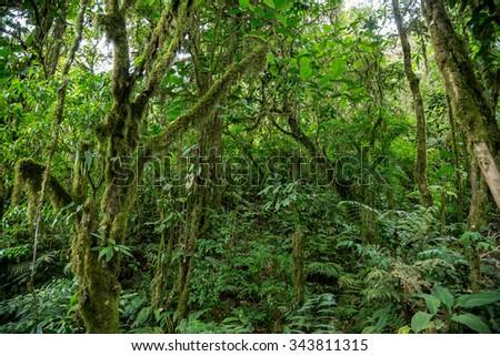 green dense jungle in Costa Rica - stock photo