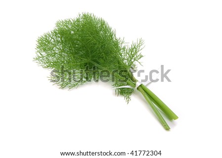green dill - stock photo