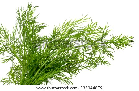 green dill on a white background - stock photo