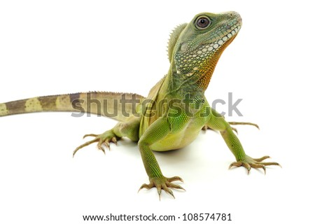 Green dragon on a white background - stock photo