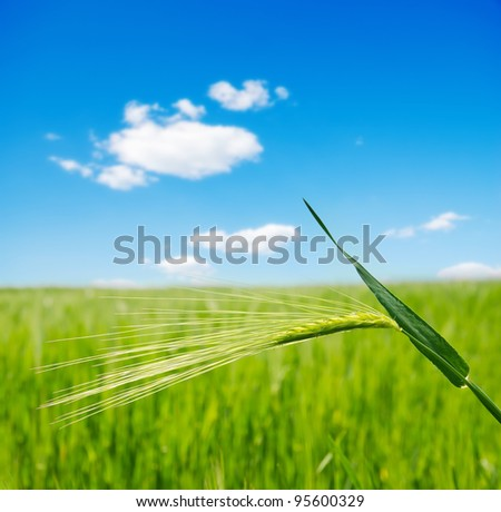 green ear over field. soft focus - stock photo