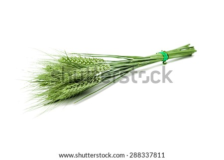 green ears of wheat on a white background - stock photo