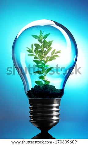 Green eco energy concept. Plant growing inside light bulb on blue background - stock photo