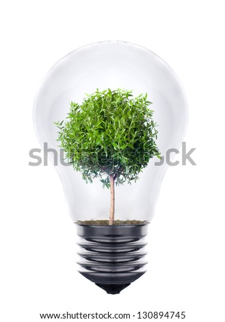 Green eco energy concept, plant growing inside the light bulb - stock photo