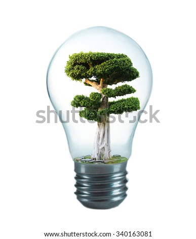 Green eco energy concept. Tree growing inside light bulb, isolated on white - stock photo