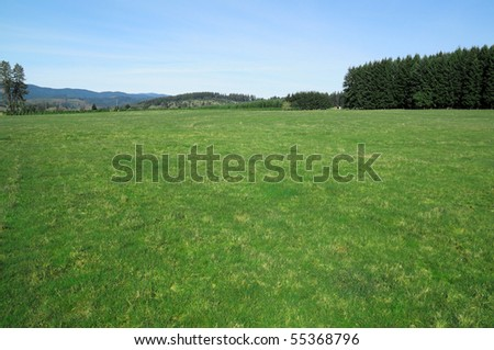 Green empty field with shortly cut grass and trees in the background