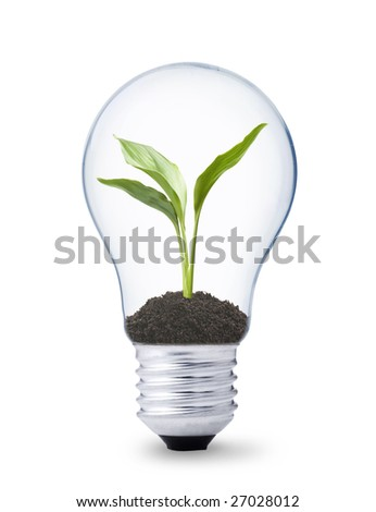 green energy concept, lightbulb with plant growing inside - stock photo