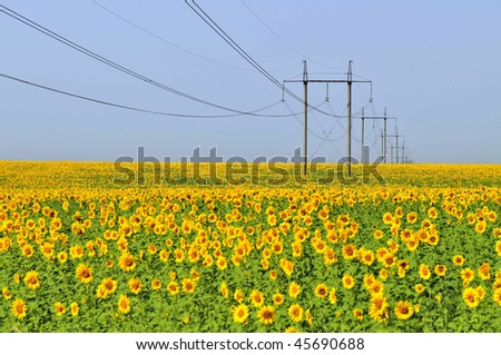 Green energy: sunflowers field and high tension power towers - stock photo